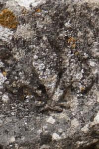 Airvault, fragment erratique d'architrave, détail de l'ornementation du gable avec une fleur de lys